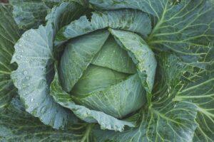 גידול ירקות בבית - מתאים לכל אחד?